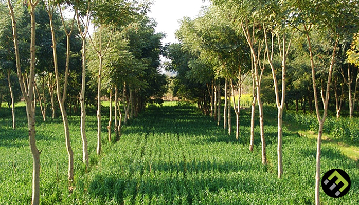 What is Agroforestry?   EcoMatcher