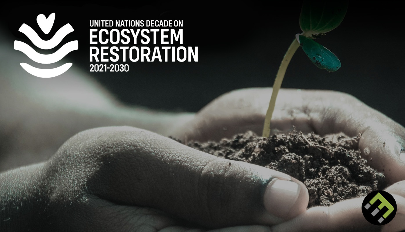 We'Re In The Un Decade On Ecosystem Restoration: Here'S What That Means    Ecomatcher